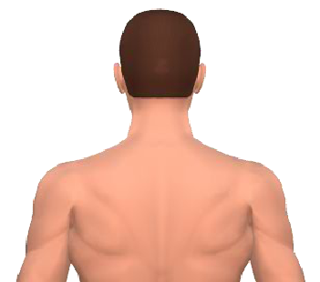 Slide 1 of the animation showing lateral flexion of the head.