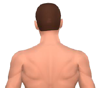 Slide 2 of the animation showing lateral flexion of the head.