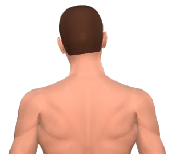 Slide 3 of the animation showing lateral flexion of the head.