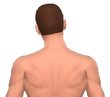 Slide 4 of the animation showing lateral flexion of the head.