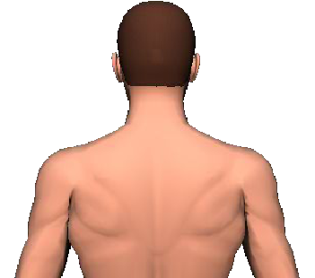 Slide 1 of the animation showing rotation of head and neck to the same side.