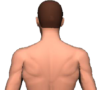 Slide 2 of the animation showing rotation of head and neck to the same side.