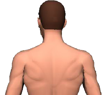 Slide 3 of the animation showing rotation of head and neck to the same side.