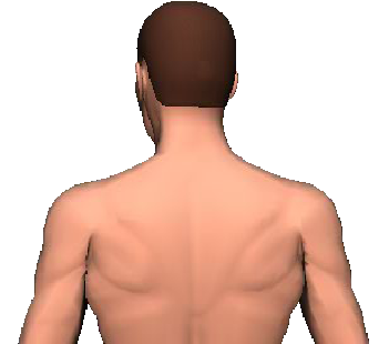 Slide 4 of the animation showing rotation of head and neck to the same side.