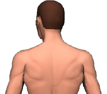 Slide 5 of the animation showing rotation of head and neck to the same side.