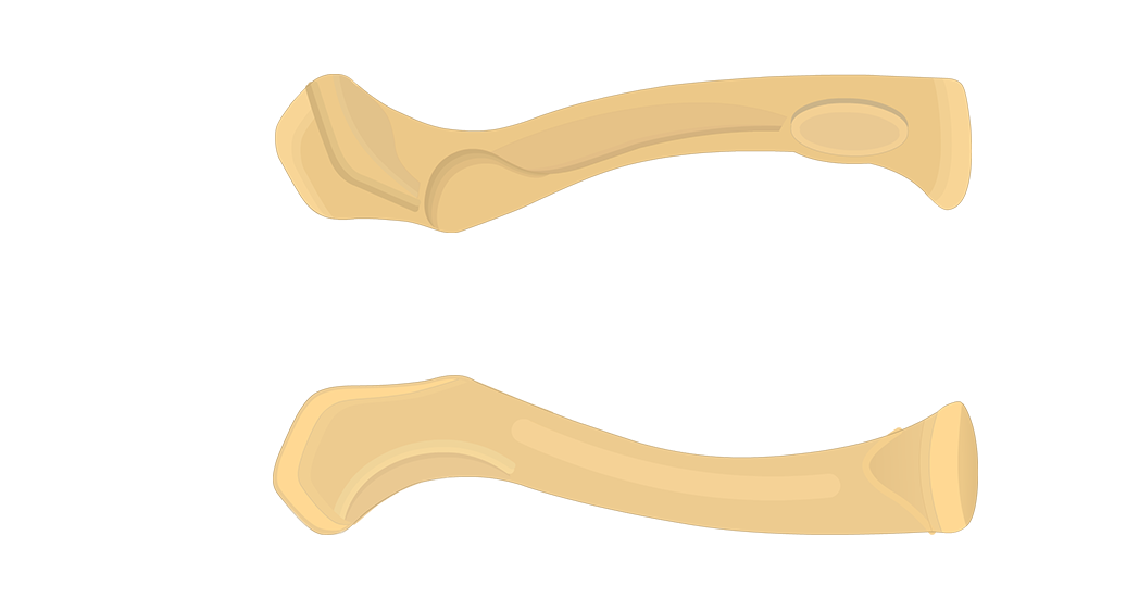 Clavicle Bone - An Introduction