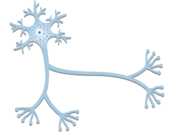 General Structure of a Neuron (Nerve Cell) - Featured
