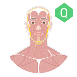System Quizzes • Free Anatomy & Physiology Quizzes